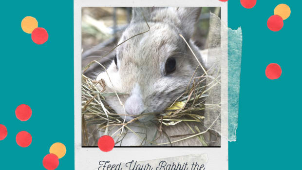 best-hay-for-bunny-rabbits