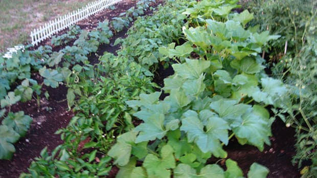 the-disadvantages-of-a-home-vegetable-garden