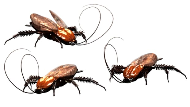 proven-ways-to-prevent-cockroach-infestations-in-your-home