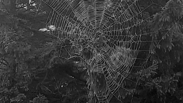 spiderwebs-and-cobwebs
