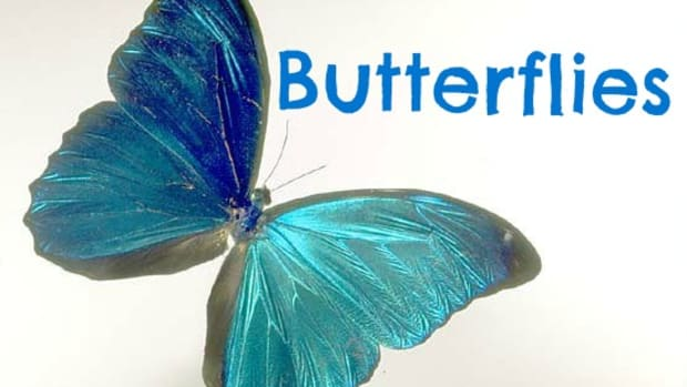 the-butterfly-pictures
