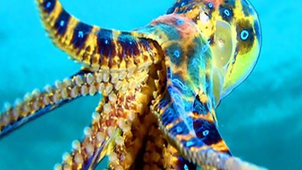deadly-and-dangerous-ocean-creatures