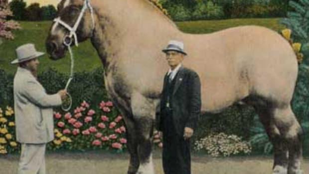 huge-horses