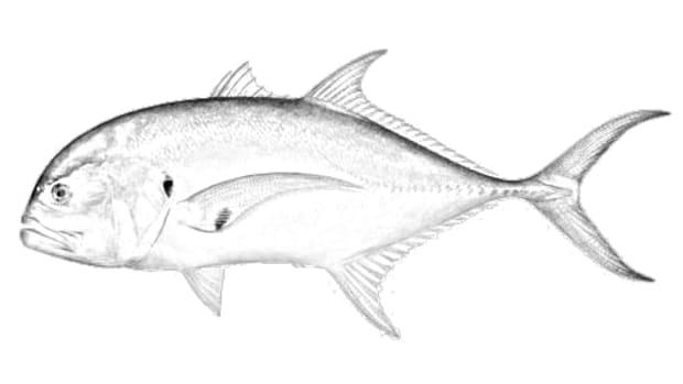 fishtailmount