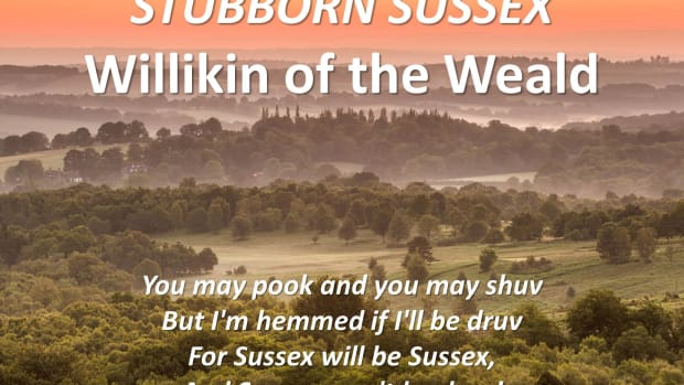 stubborn-sussex-willikin-of-the-weald