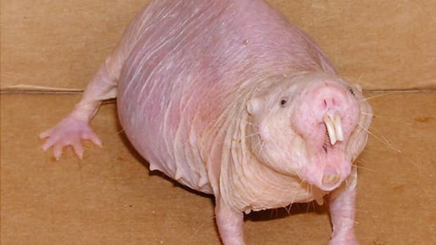 ugly-animals-top-10-ugly-animals