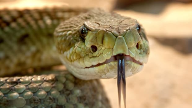the-ultimate-guide-to-workplace-snakes-10-ways-to-beat-toxic-coworkers