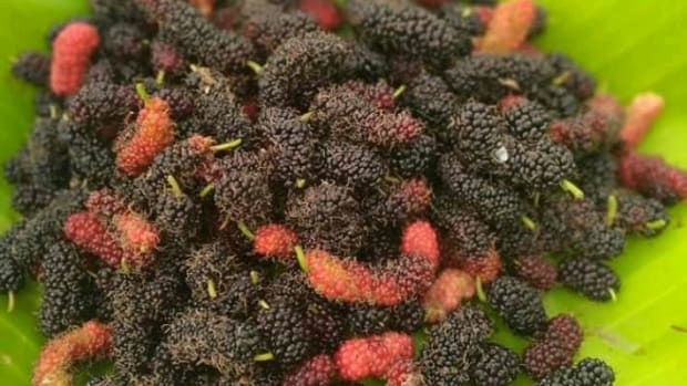 10-amazing-benefits-and-medicinal-uses-of-eating-mulberry