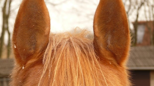 horses-and-their-sense-of-hearing
