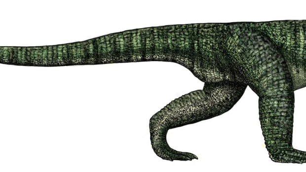 the-poposaurus-the-strange-dinosaur-like-creature-of-the-triassic
