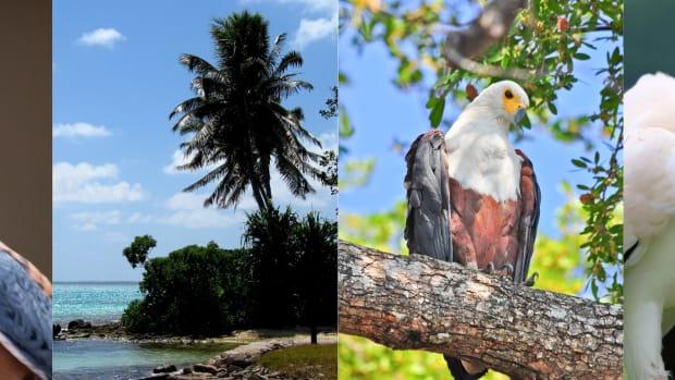 raptors-on-the-equator