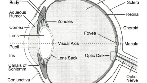 parts-and-functions-of-the-eye