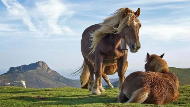 7-wonderful-and-fun-facts-about-horses