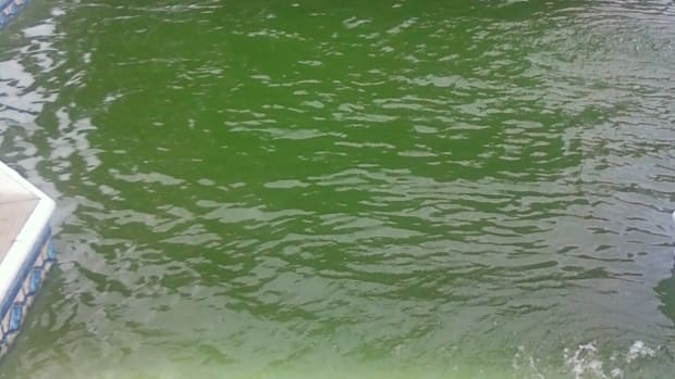 how-to-get-rid-of-algae-in-pool-without-chemicals-naturally