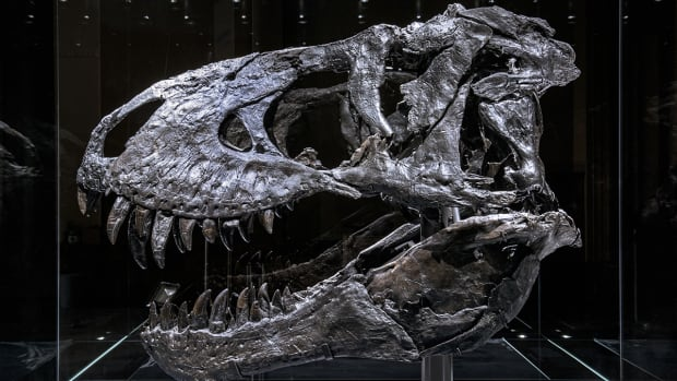why-dinosaurs-have-holes-in-their-skull