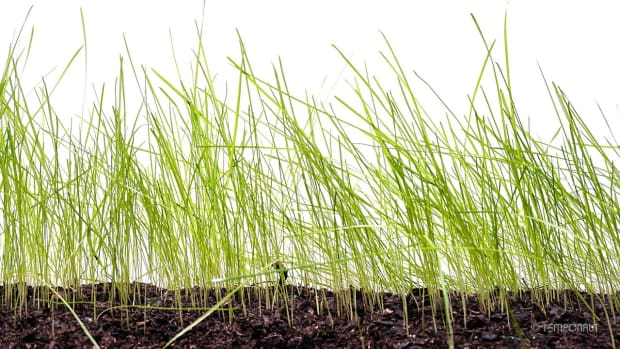 tips-regarding-how-to-grow-new-grass-successfully