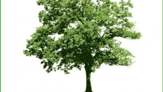 tree-pictures-and-names