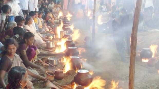 pungal-festival-of-south-india