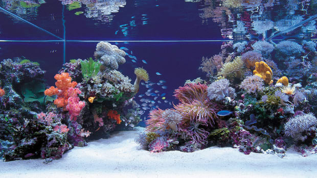beginners-guide-to-saltwater-aquariums