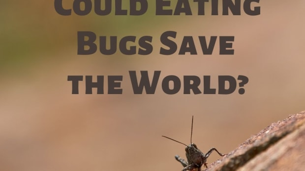 could-eating-bugs-save-the-world