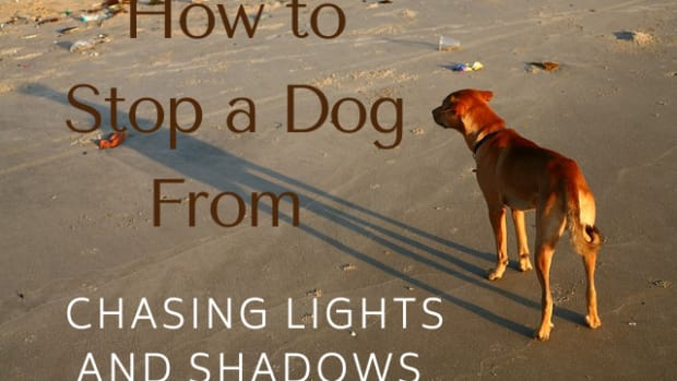 how-do-i-get-my-dog-to-stop-chasing-shadows