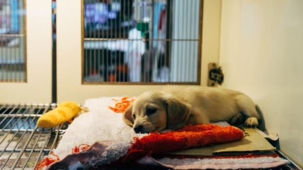 ways-to-prevent-pet-disease