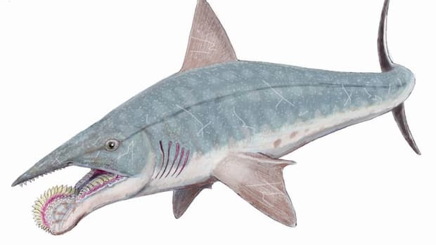 super-predators-swimming-in-the-middle-of-america