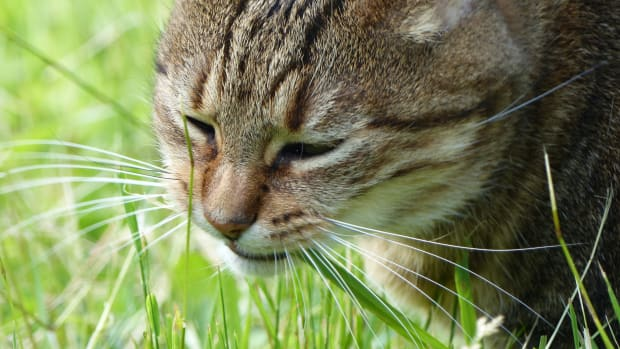 why-do-dogs-and-cats-eat-grass