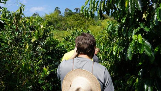 touring-a-coffee-farm-in-columbia