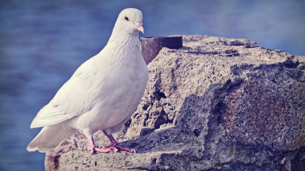 20-birds-name-in-french-with-english-meanings