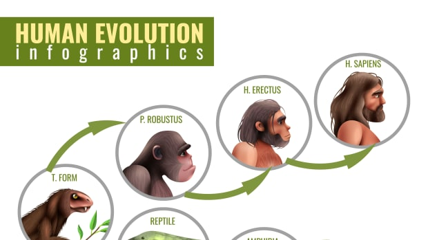 humans-evolved-from-four-legged-creatures-similar-to-squirrels