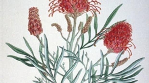 botanical-art-compendium