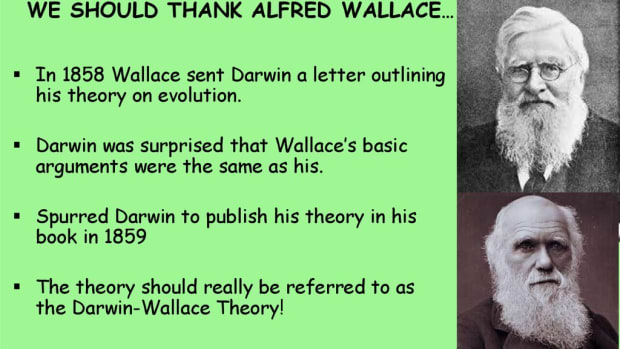 darwin-and-wallace-and-the-theory-of-evolution