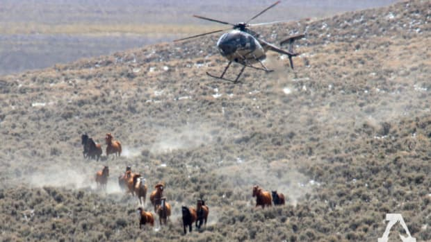 a-possible-end-to-the-rein-of-terror-for-wild-horses-and-burros