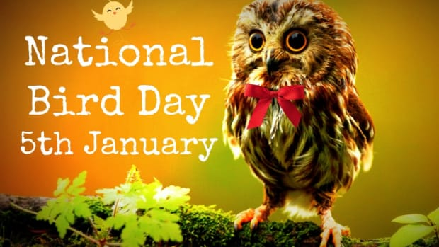 how-to-celebrate-national-bird-day-5th-january