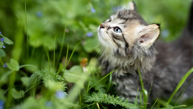 your-guide-to-successfully-rearing-stray-kittens