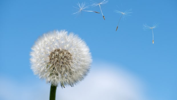 enjoy-the-outdoors-despite-allergy-issues-with-these-tips