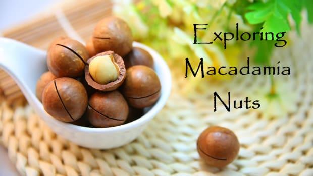 exploring-macadamia-nuts