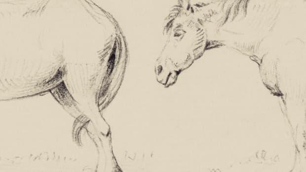 horse-idioms