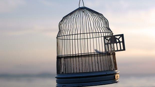 the-empty-cage