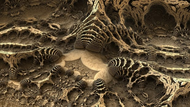 6-really-strange-things-that-fossilized