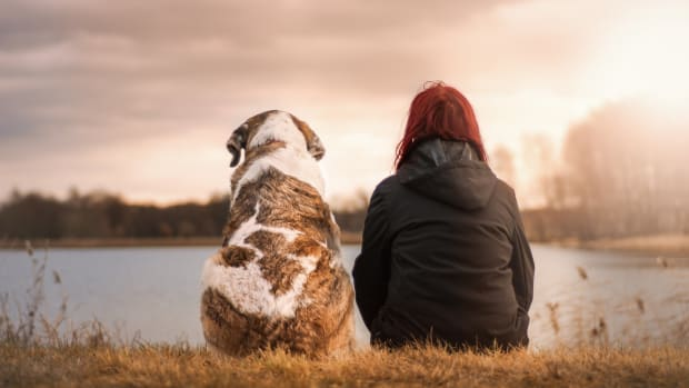 how-to-know-if-my-senior-dog-has-sundowners-syndrome