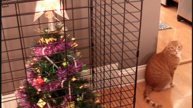 how-to-keep-a-cat-out-of-christmas-tree
