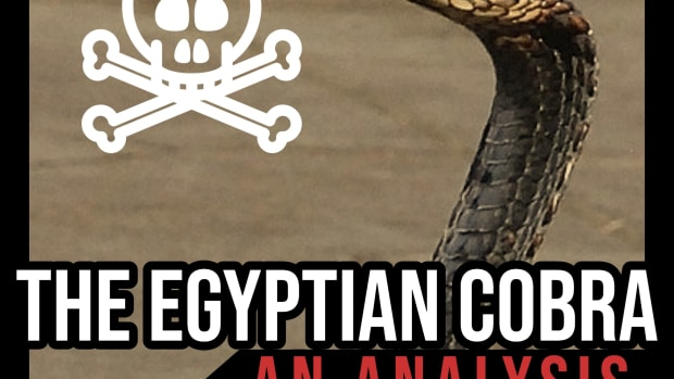 the-egyptian-cobra