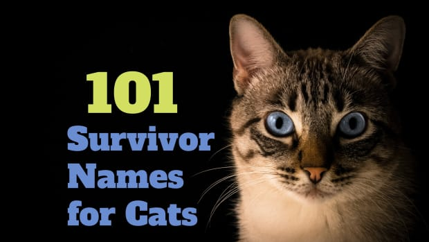 survivor-names-for-cats