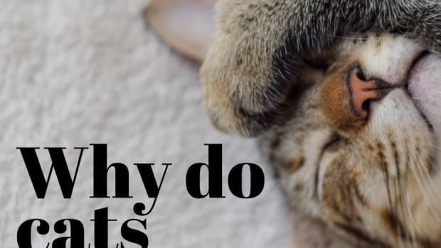 why-do-cats-like-to-knead