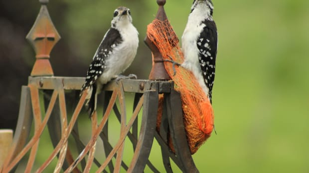 living-with-wildlife-on-the-farm