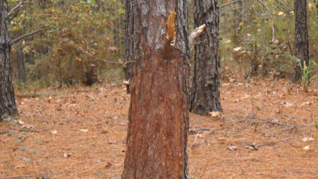 deer-hunting-year-round