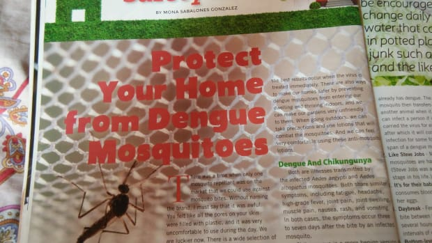 protect-your-home-from-dengue