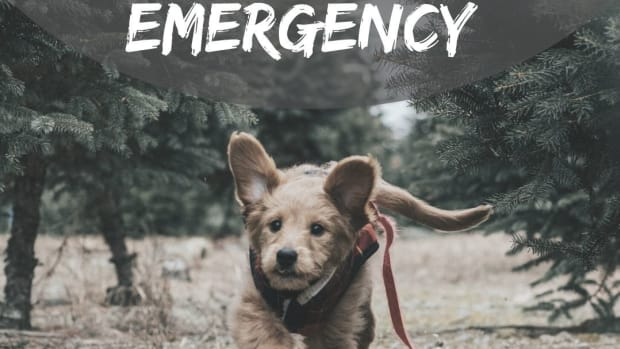 train-your-pets-for-an-emergency